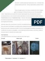 about color.pdf