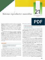 Sistema Reporductor Masculino