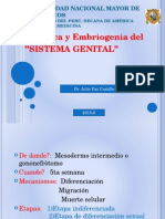 Sistema Genital