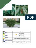 Herbario Galicia 1ºeso