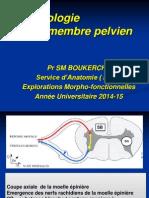 Anat Cours Névrologie Mbrepelvien 2014