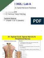 Nervous System Slides
