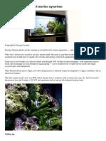 How to Set Up a Planted Marine Aquarium