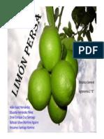 Descripción Botanica -Limón Persa 2
