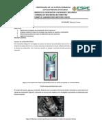 informe inyectores.pdf