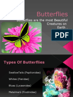 Butterflies Are the Most Beautiful Creatures On