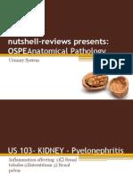04 - Urinary System