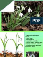 2 Flori de Primavara