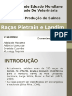 Suinos - Racas