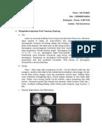 gejala jamur patogen