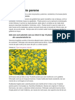 Top 10 plante perene.doc