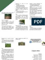 Compost y Bioles