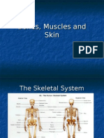 8th Grade- Biology- Bones, Muscles and Skin