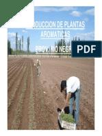 Cultivo de Aromaticas Rio Negro