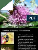 Abelhas  Nativas  ou Indigenas (1).ppt