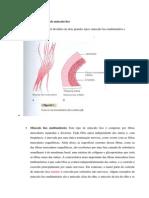 Contração e Excitação Do Músculo Liso