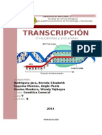 INFORME TRANSCRIPCION