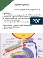 02 Spermatogénèse Complète