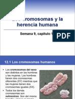 sem9cap12cromosomas-110323082759-phpapp02.pdf