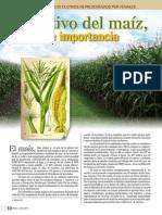 El Cultivo Del Maiz Historia e Importancia