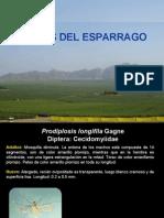 PLAGAS DE ESPARRAGO ASC.pdf