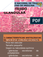 Diapositivas Tejido Glandular