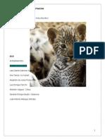 Jaguar en Peligro de Extincion