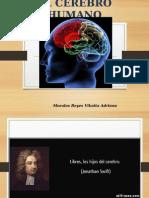 3.- El Cerebro Humano