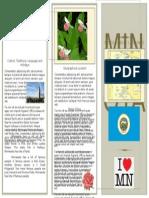sonyas state brochure template