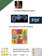 1 Clase Introducción a La Neurología Del Adulto FINAL