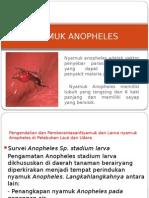 Nyamuk Anopheles