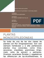 Plantas Mono y Dicotiledoneas
