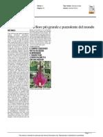 Sboccia a Urbino il fiore più grande e puzzolente del mondo - Il Messaggero del 28 aprile 2015