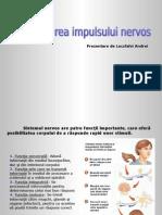 Transmiterea Impulsului Nervos