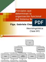 Principios Organización FONOAUDIOLOGIA
