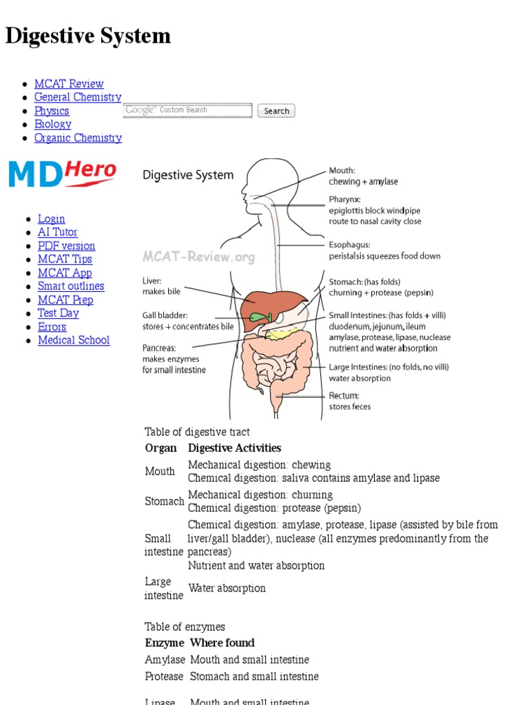 Digestive System - MCAT Review | Digestion | Human ...