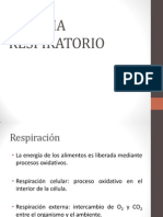 6. Sistema Respiratorio