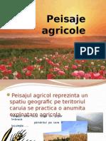 Peisaje Agricole