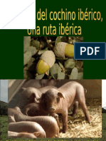 EL CERDO IBERICO.pps