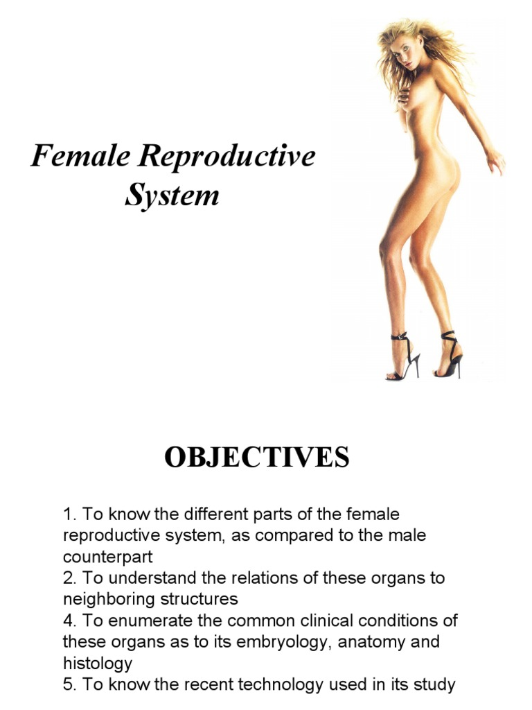 Gross Anatomy Of The Female Reproductive System Uterus Vagina