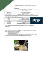 Deltoide ANT Et Coraco brachial