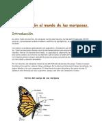 Introducción Al Mundo de Las Mariposas_1
