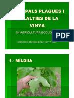 Plagues i Malalties de La Vinya en Agric. Ecol.