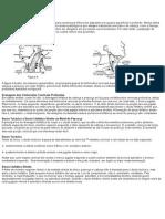 Linfáticos Do Pescoço e Da Cabeça Drenam Para Numerosos Linfonodos Dispostos Em Grupos Superficial e Profundo