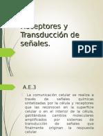 Receptor y Transduccion de Señales 4hcpd