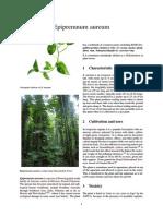 Pothos Plant - Epipremnum Aureum