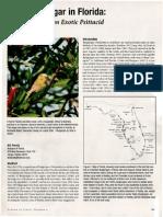 Budgerigar population status in Florida (Pranty 2001)