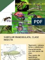 Morfología Ext. e Interna de Insectos