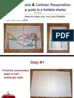 photosynthesis & cellular respiration foldable presentation