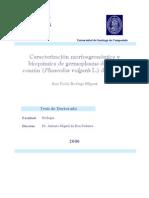clasificacion de germoplasma de judia comun de españa